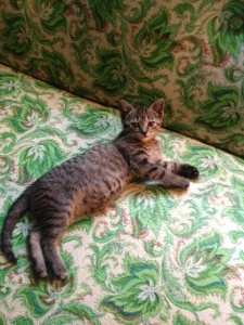 And this is a totally unrelated picture of my new kitten, Tina (named after my idol Tina Turner),