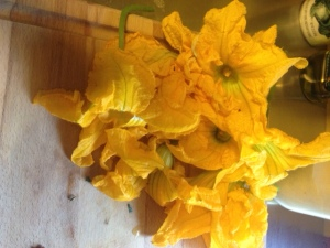 Male Squash Blossoms