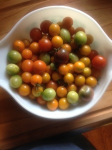 Cherry Tomatoes of all sizes, colors and shapes.