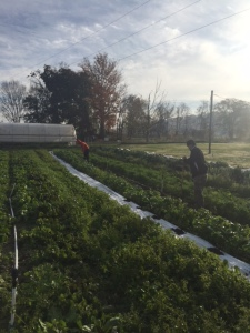 Tusculum students helping winterize the farm.